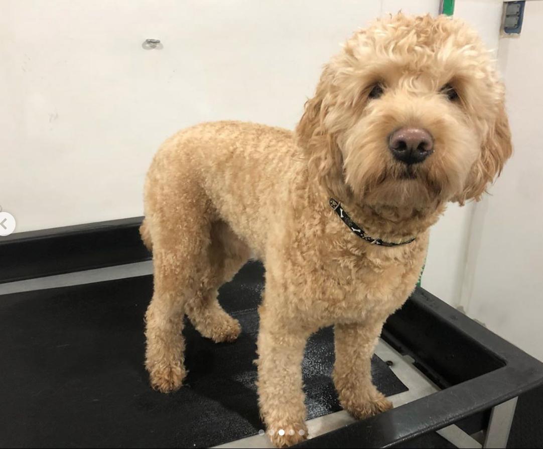 dog wash anchorage alaska grooming boarding