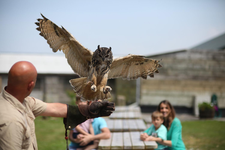Gwel An Mor Owl