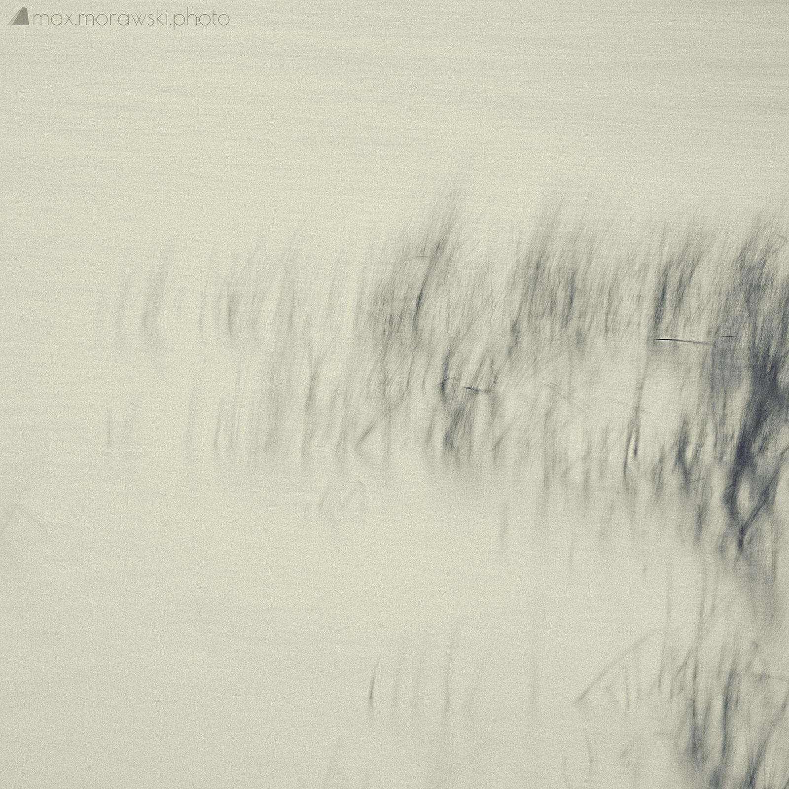 November Reeds; Charcoal study #7