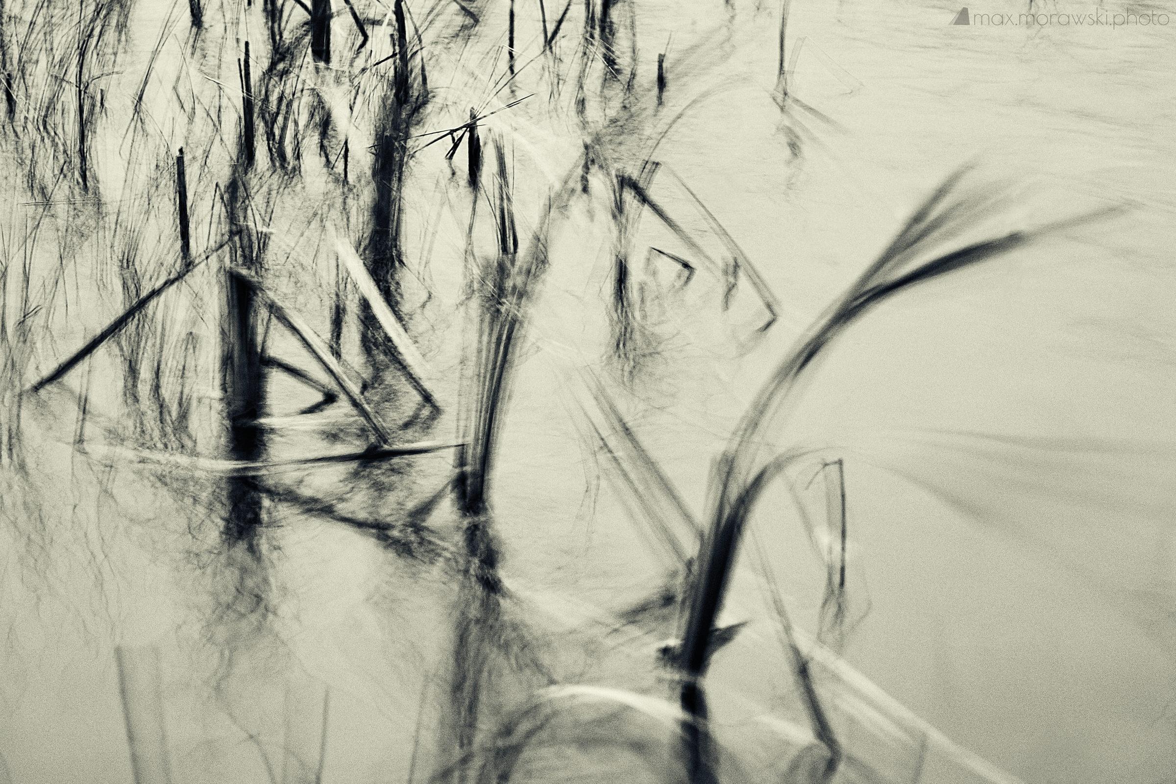 November Reeds; Charcoal study #6