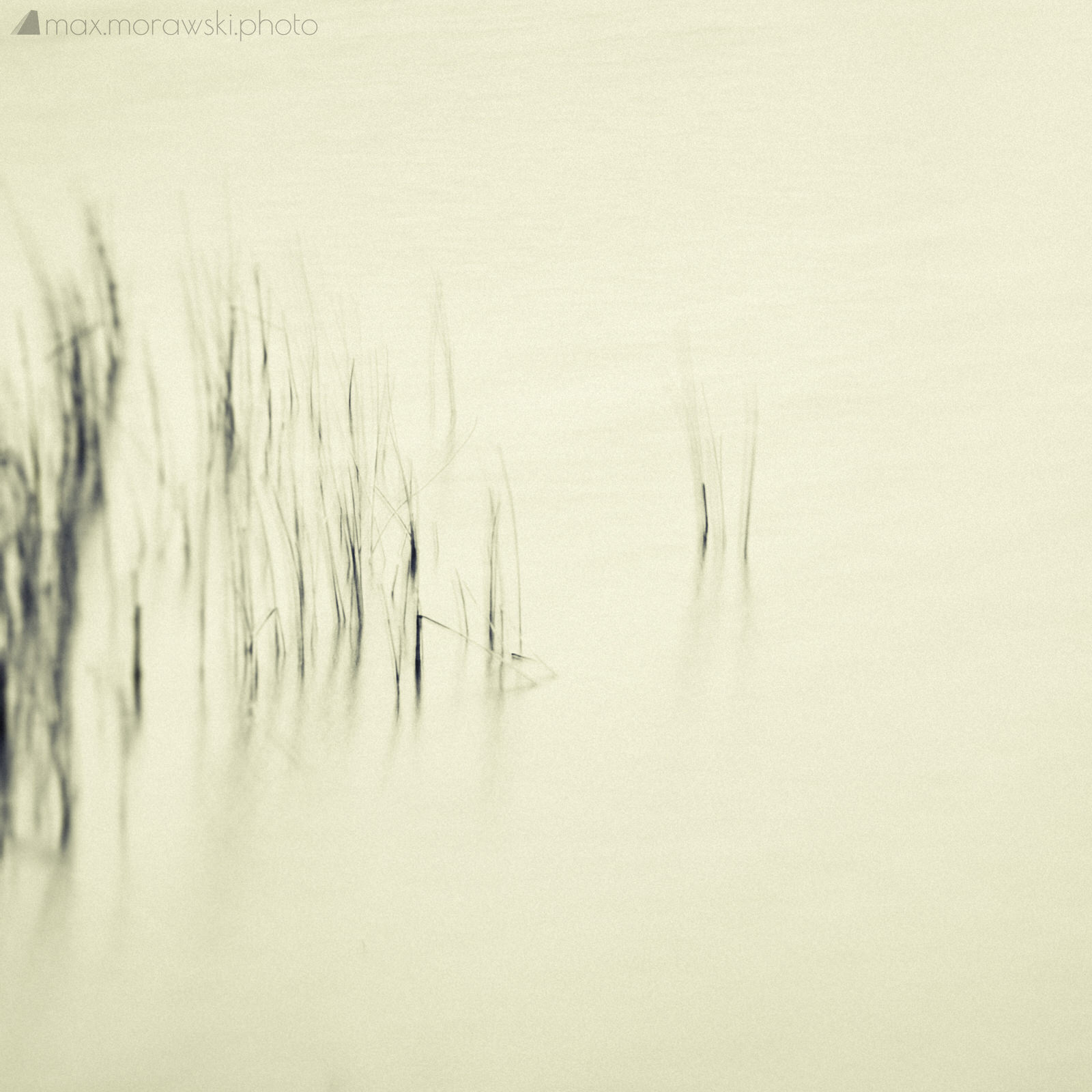 Lake Stone Reeds #6
