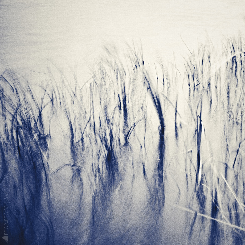 November Reeds; Charcoal study #3