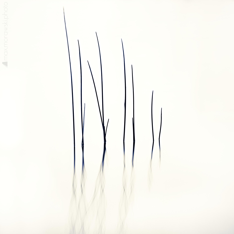 Lake Stone Reeds #2