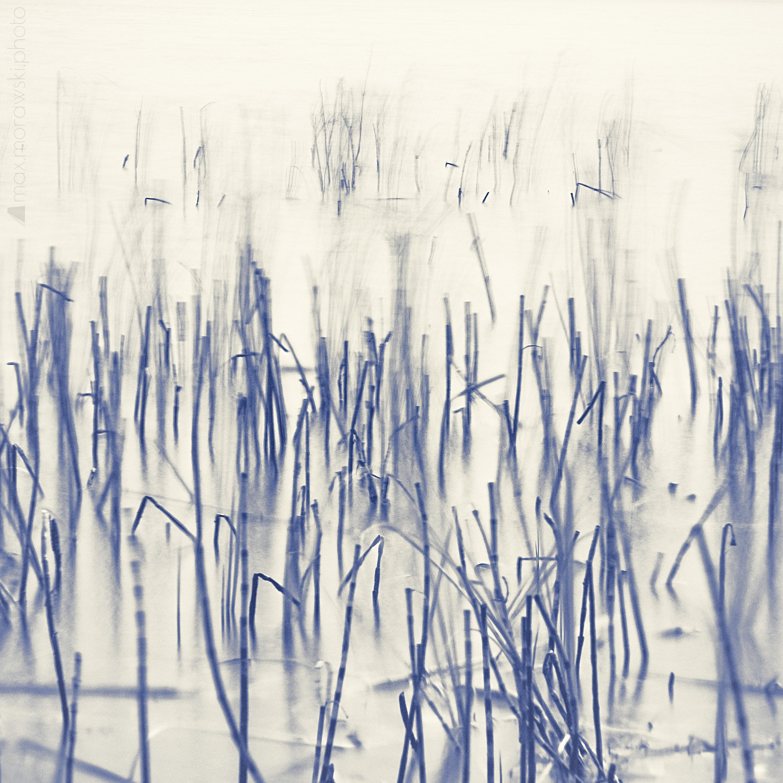 November Reeds; Charcoal study #1