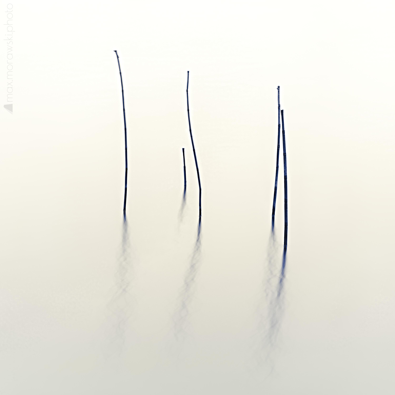 Lake Stone Reeds #3
