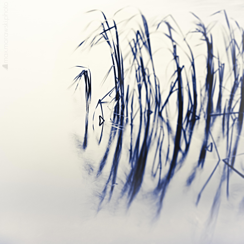 November Reeds; Charcoal study #5