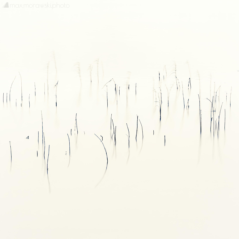 Lake Stone Reeds #5