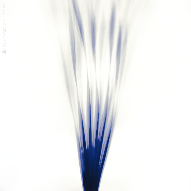 November Reeds; Charcoal study #10