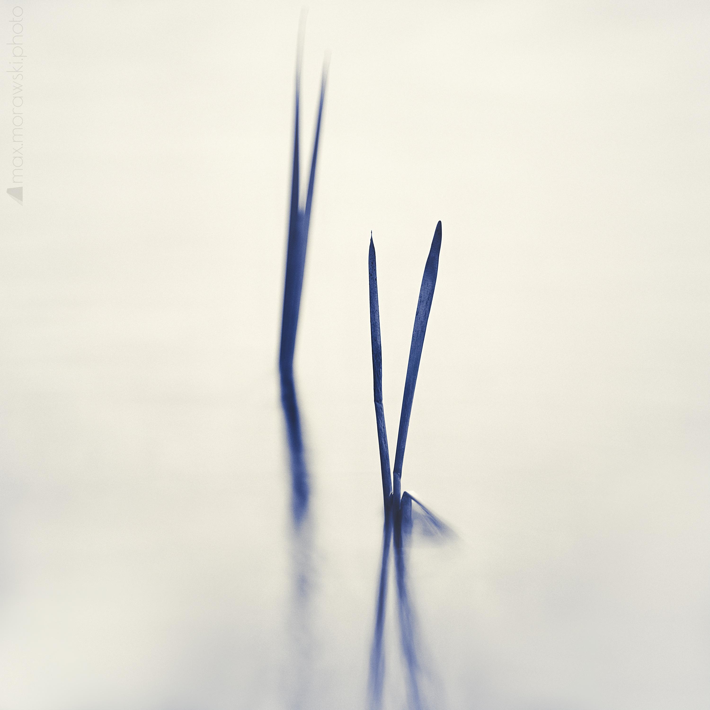 Lake Stone Reeds #4