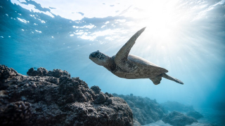 Undersea Creatures