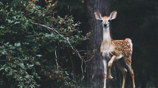 Wildlife Nature Walk
