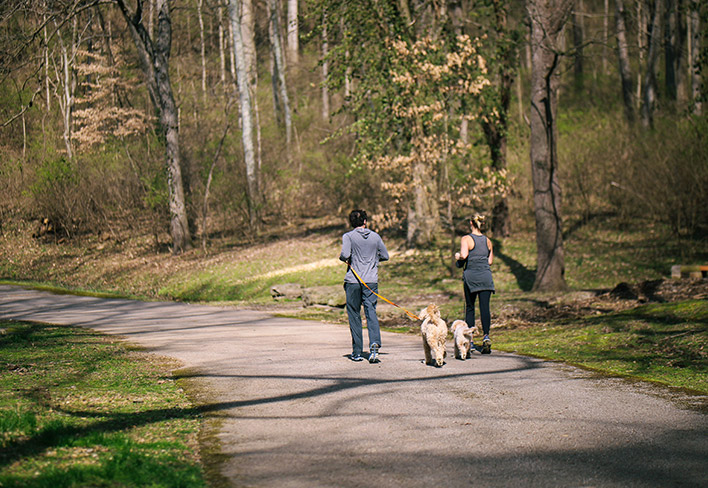 A couple is jogging with two dogs
