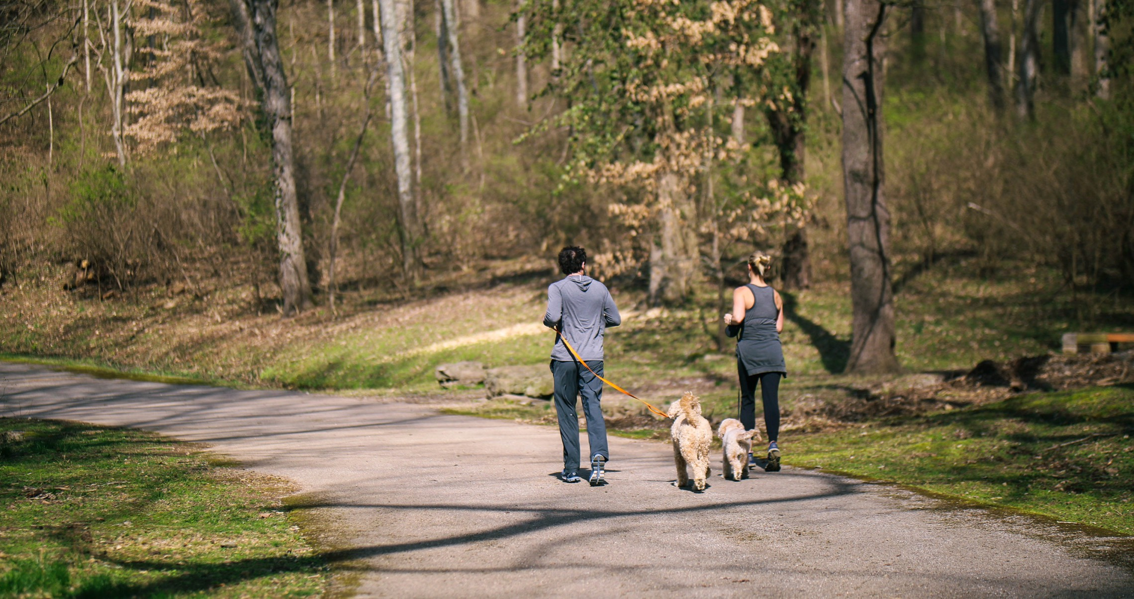 A couple jogging in the park with two dogs