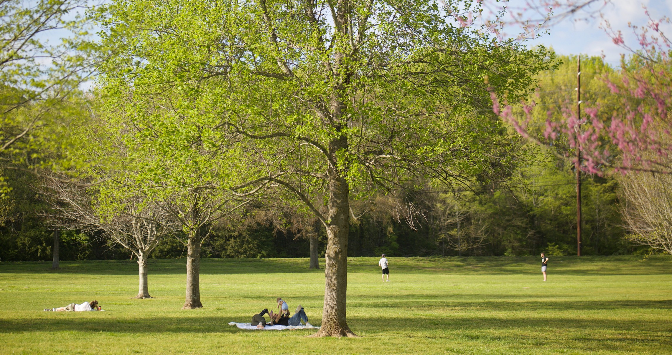 People resting under the trees in a park