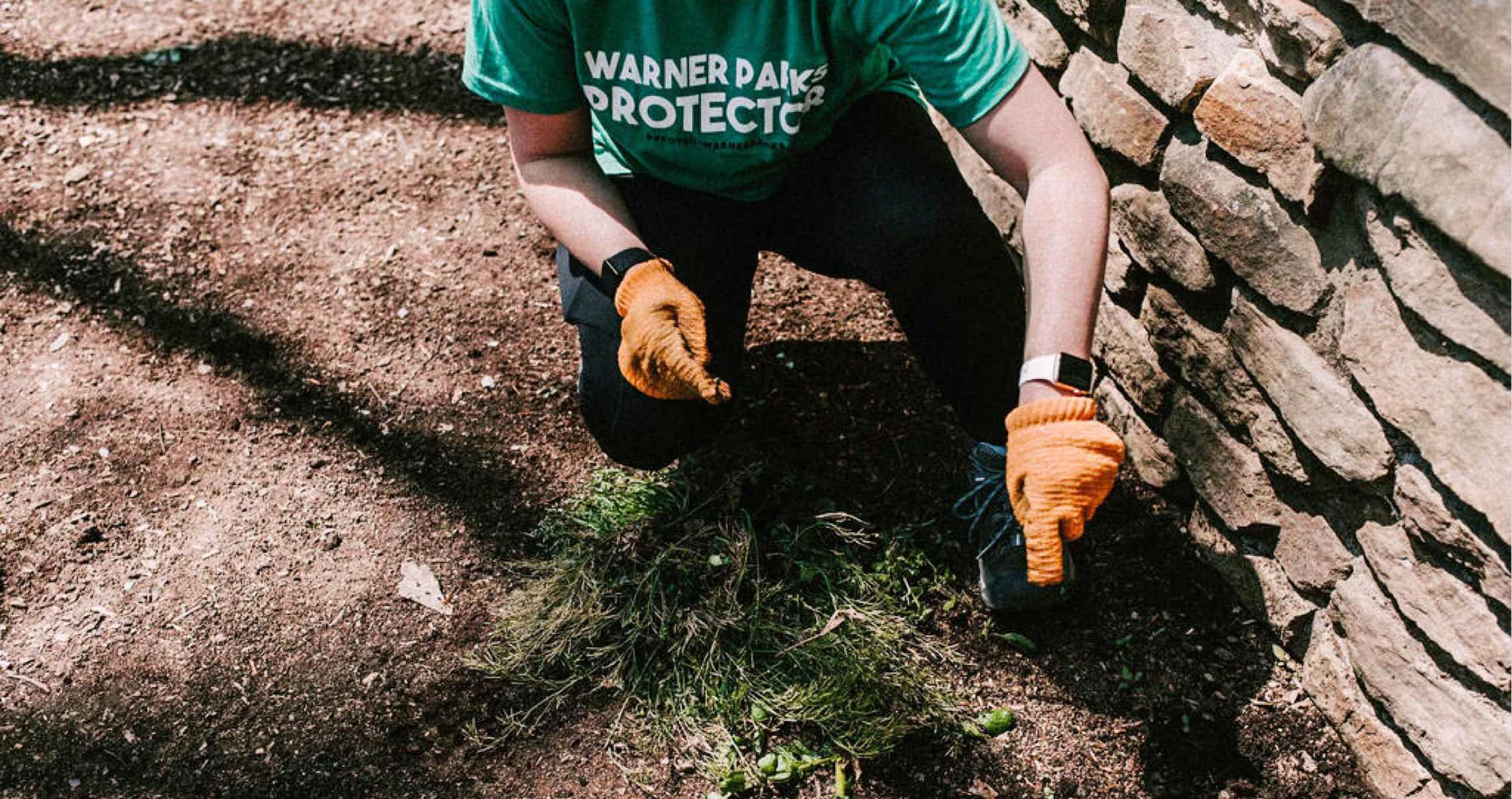 A volunteer removing old grass at Warner Parks