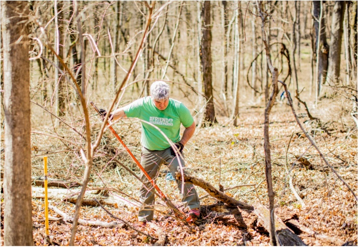 A person removing old branches
