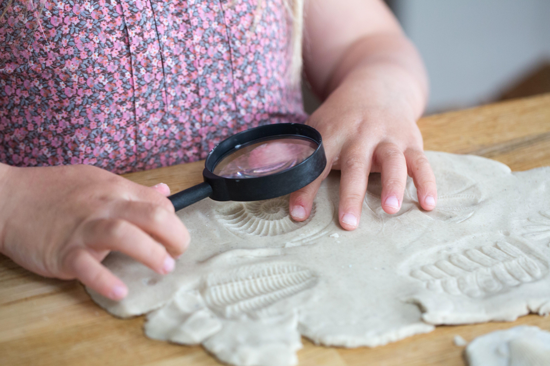 Yellow Door Let's Investigate - Fossils
