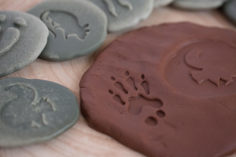 Yellow Door Let's Investigate - Woodland Footprints