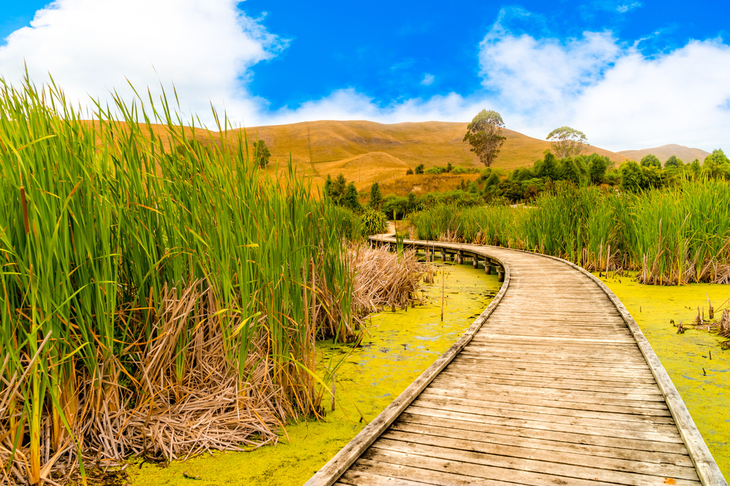 The Wetlands in Napier, New Zealand