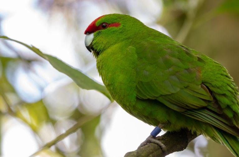 Zealandia in Wellington