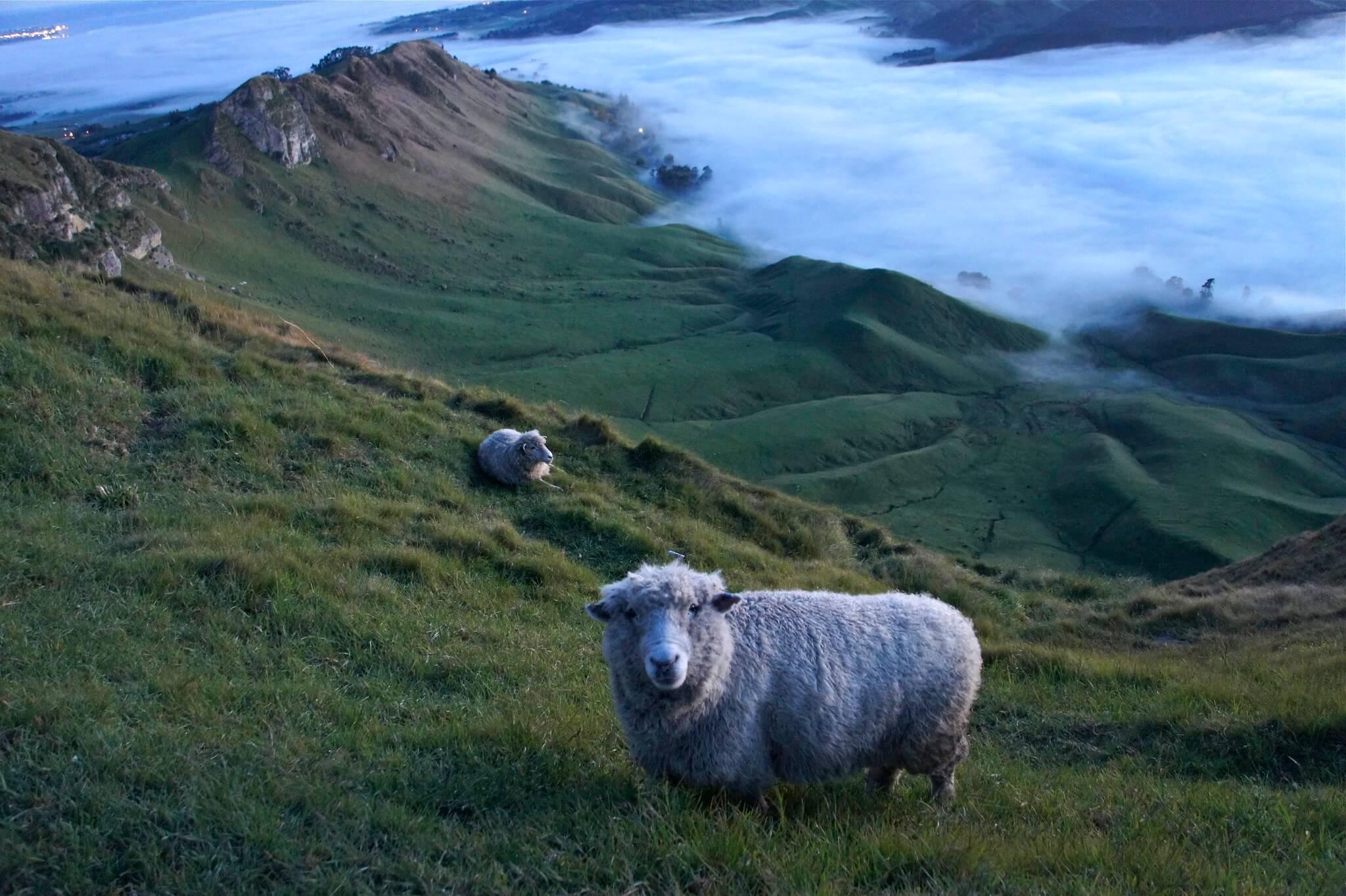 Te Mata Peak, Hawkes Bay, New Zealand