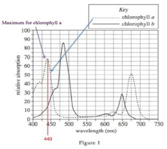 absorption of chlorophyll a
