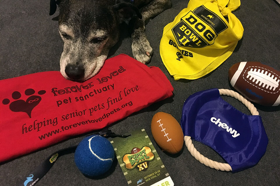Our wishlist and items you can donate to Forever Loved Pet Sanctuary
