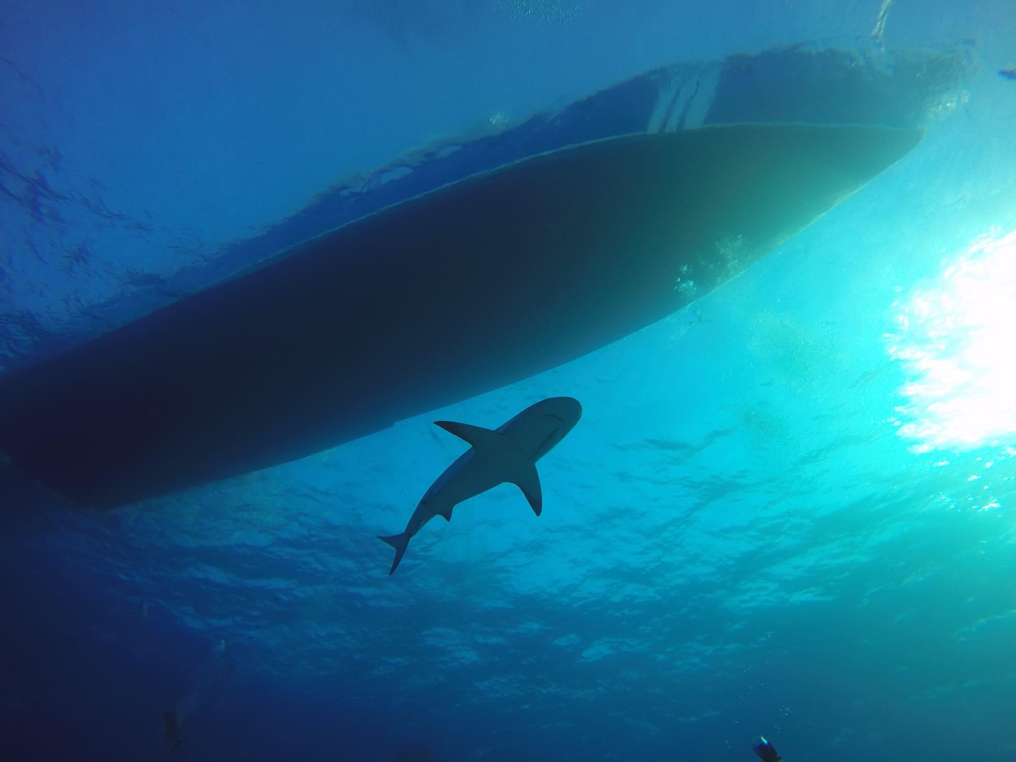 Bahamas - Shark below the boat