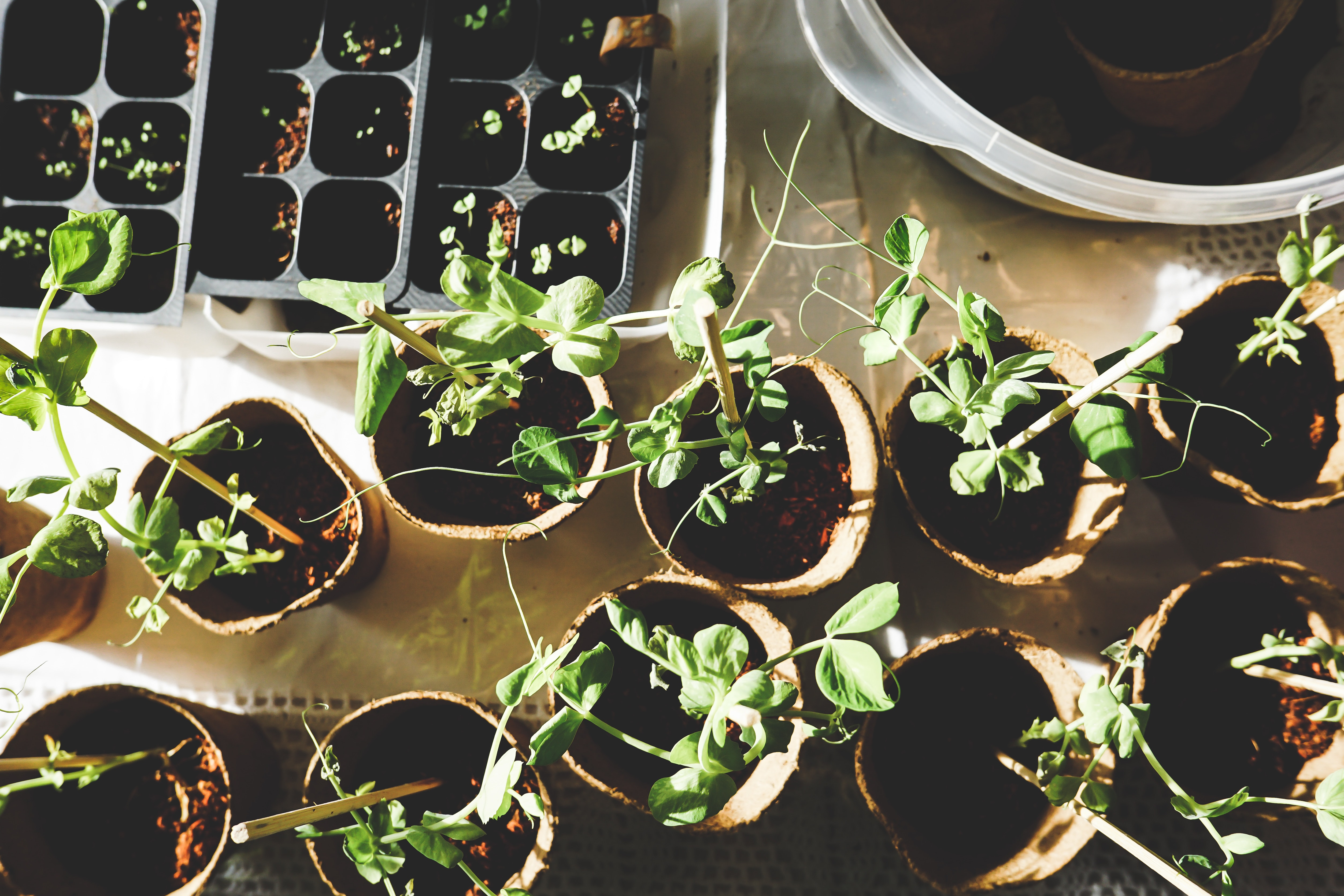 Mieux-être au travail - créer un jardin