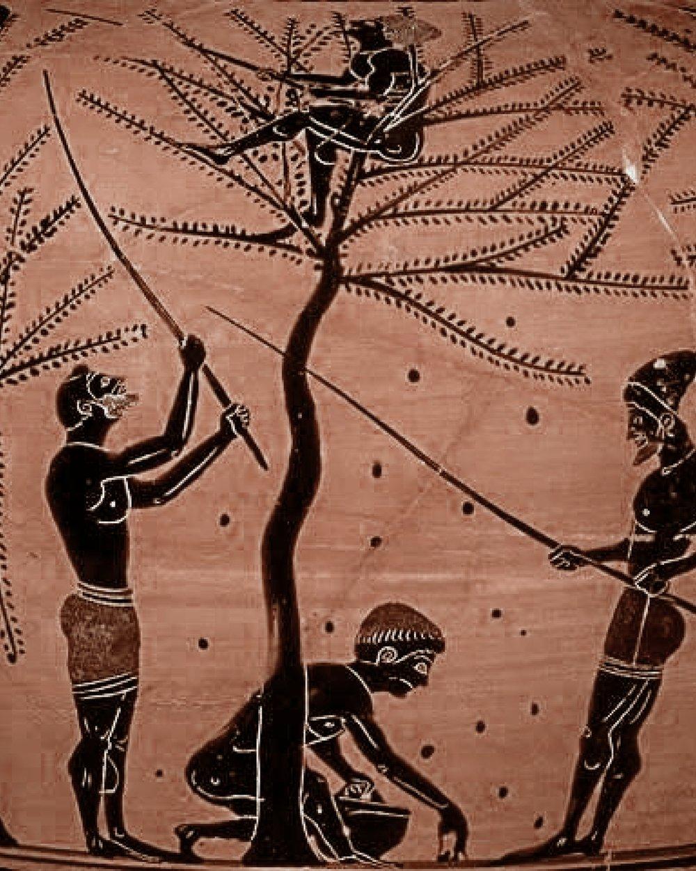 ancient greek art and illustrations food culture
