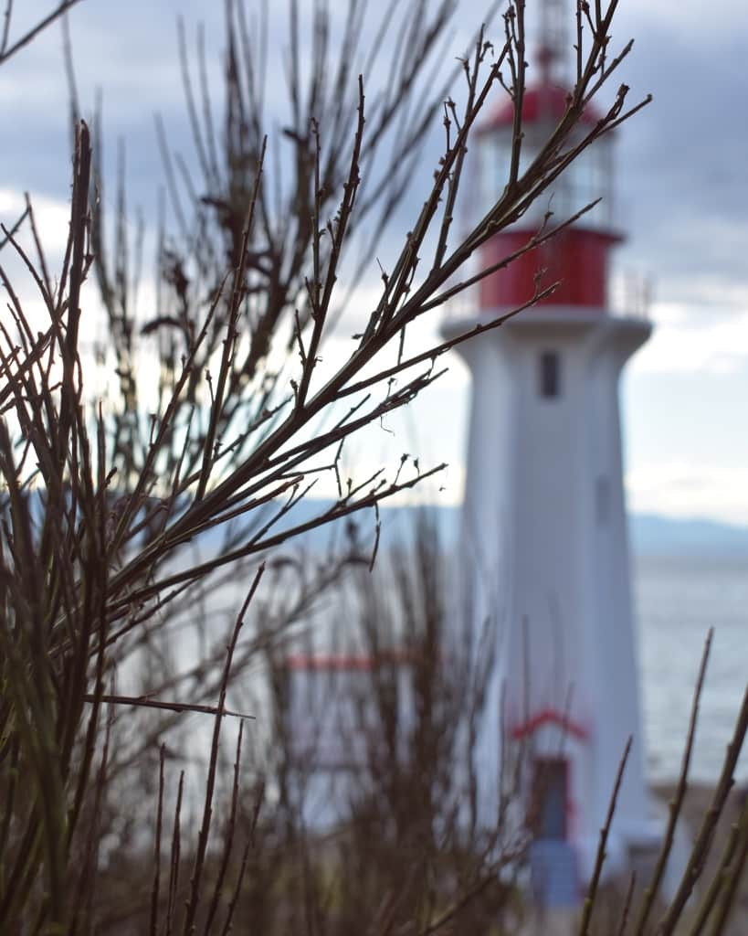 Sheringham Point Lighthouse gleams through the reeds.