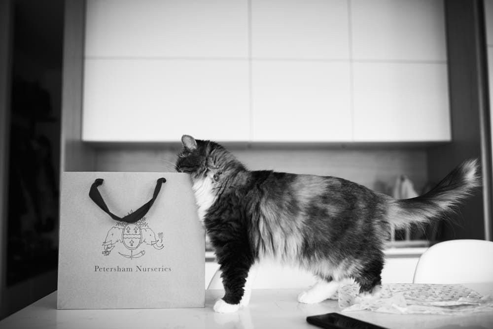 nieuwsgierige kat voorbereidingen bruiloft