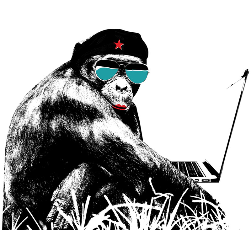 A Bonobo Rebel on the computer