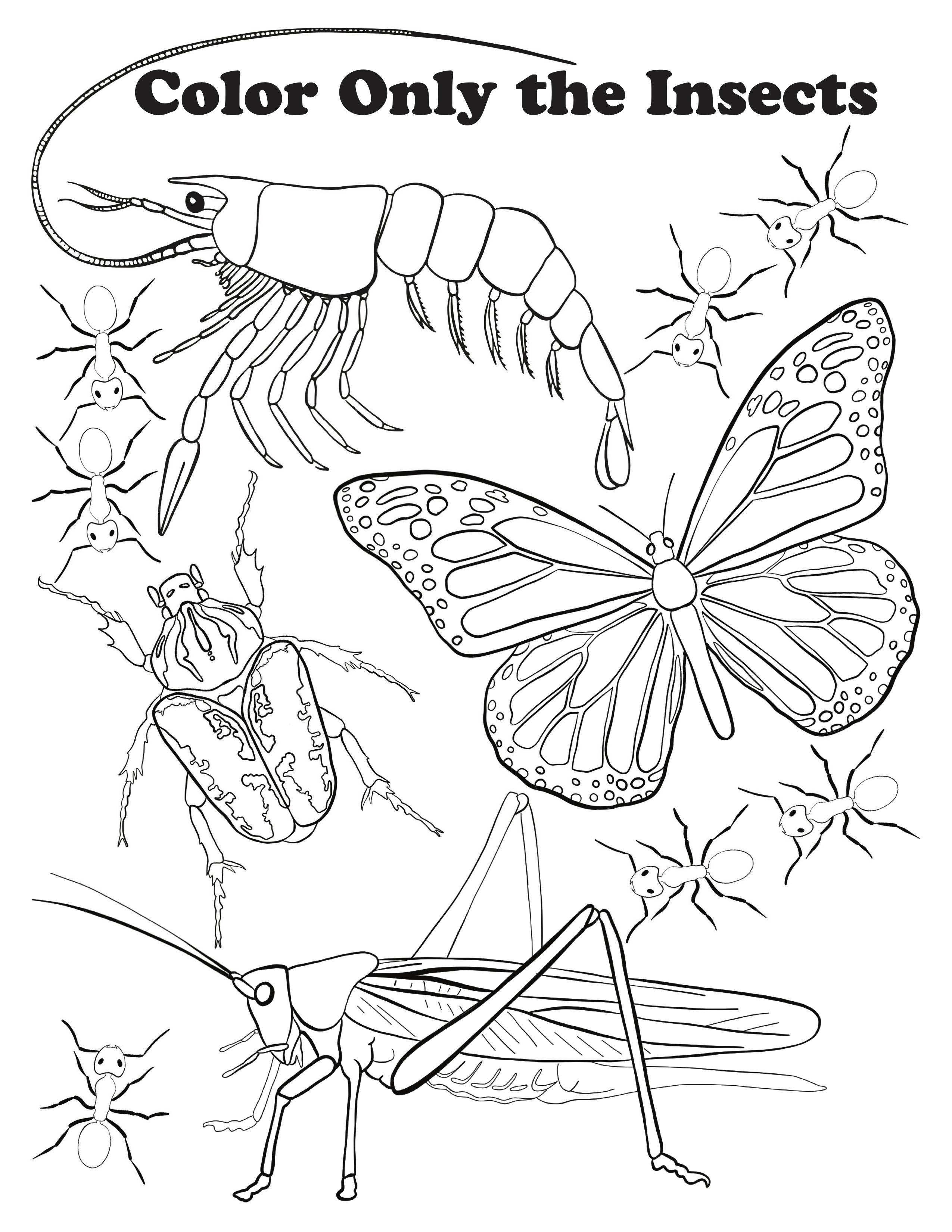 insect coloring page invasive