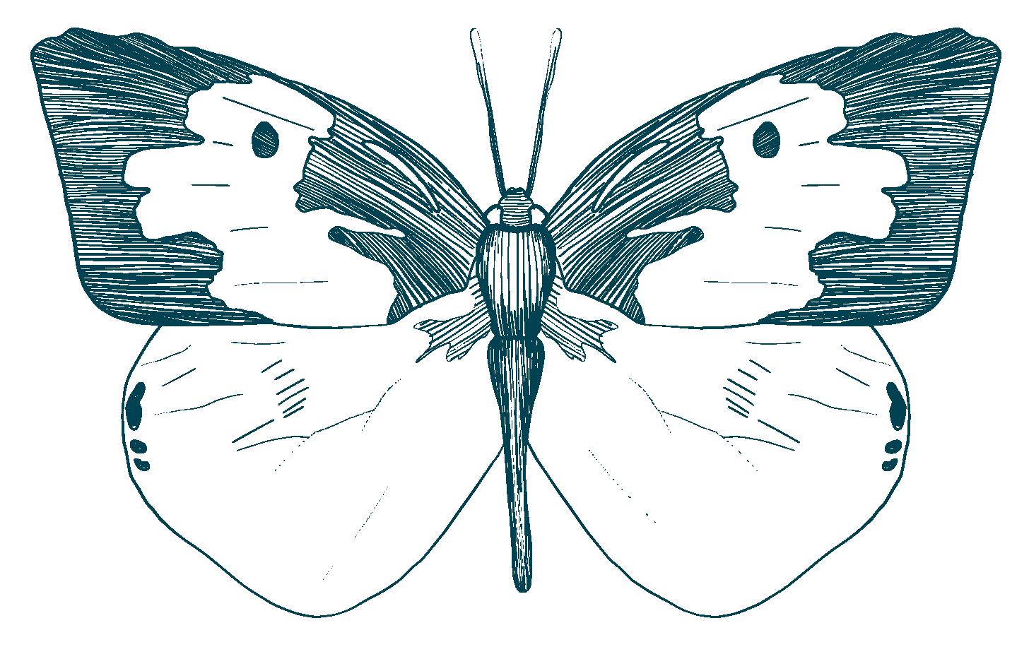 Southern Dogface Butterfly insect blackbelt prairie garden
