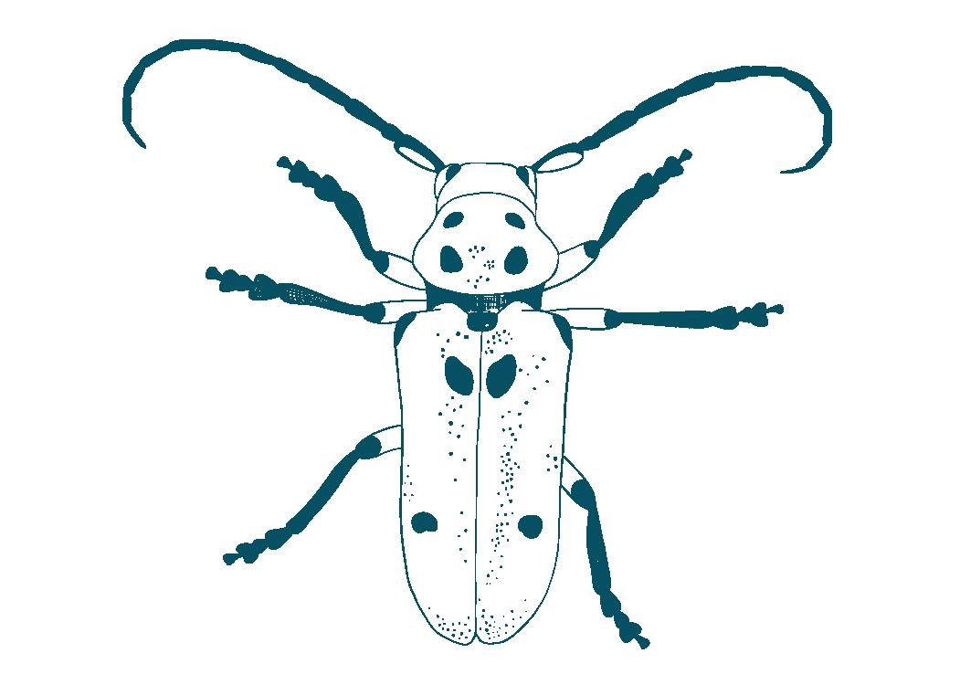 Texas milkweed beetle insect blackbelt prairie garden