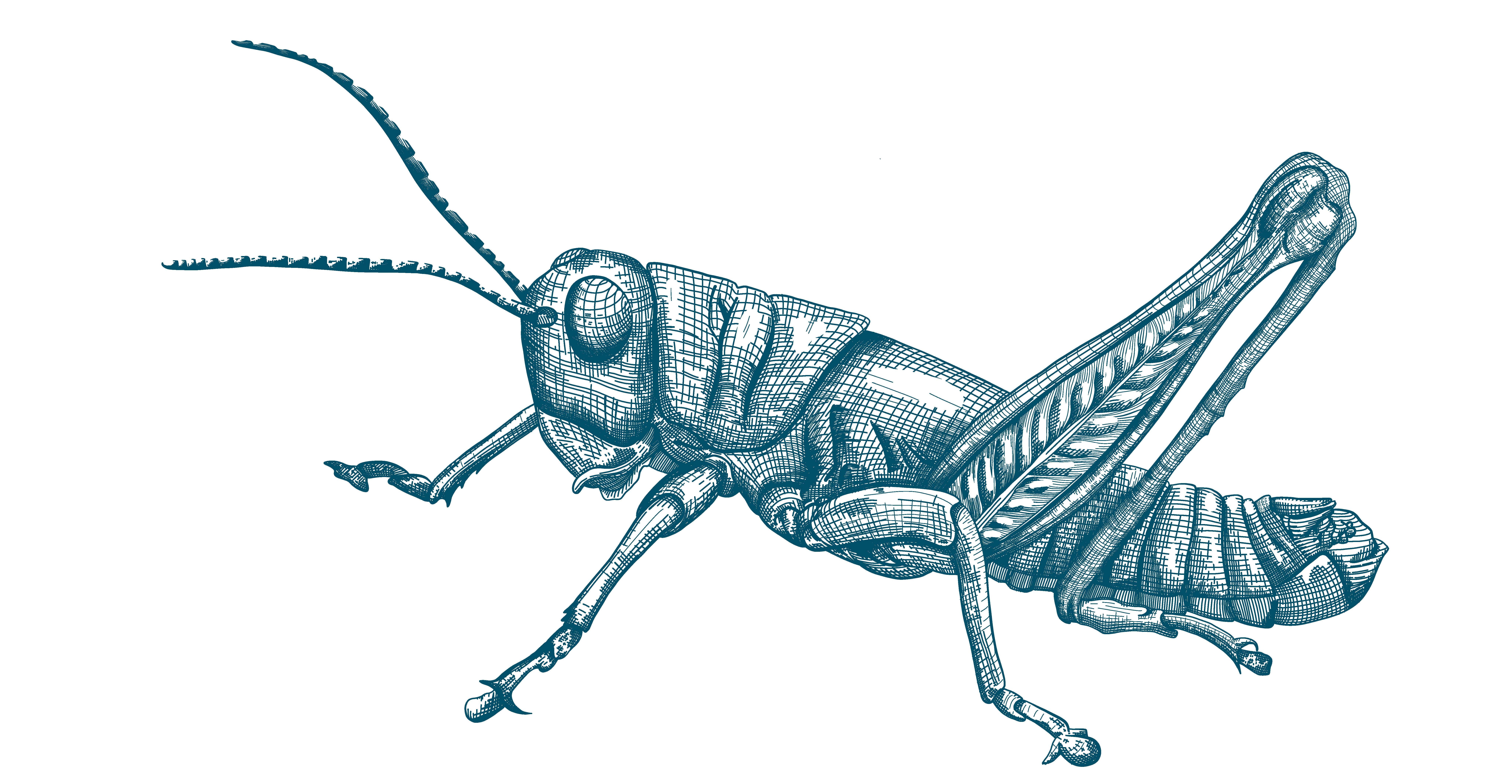 Fuzzy Olive Green Olive-green grasshopper insect blackbelt prairie garden