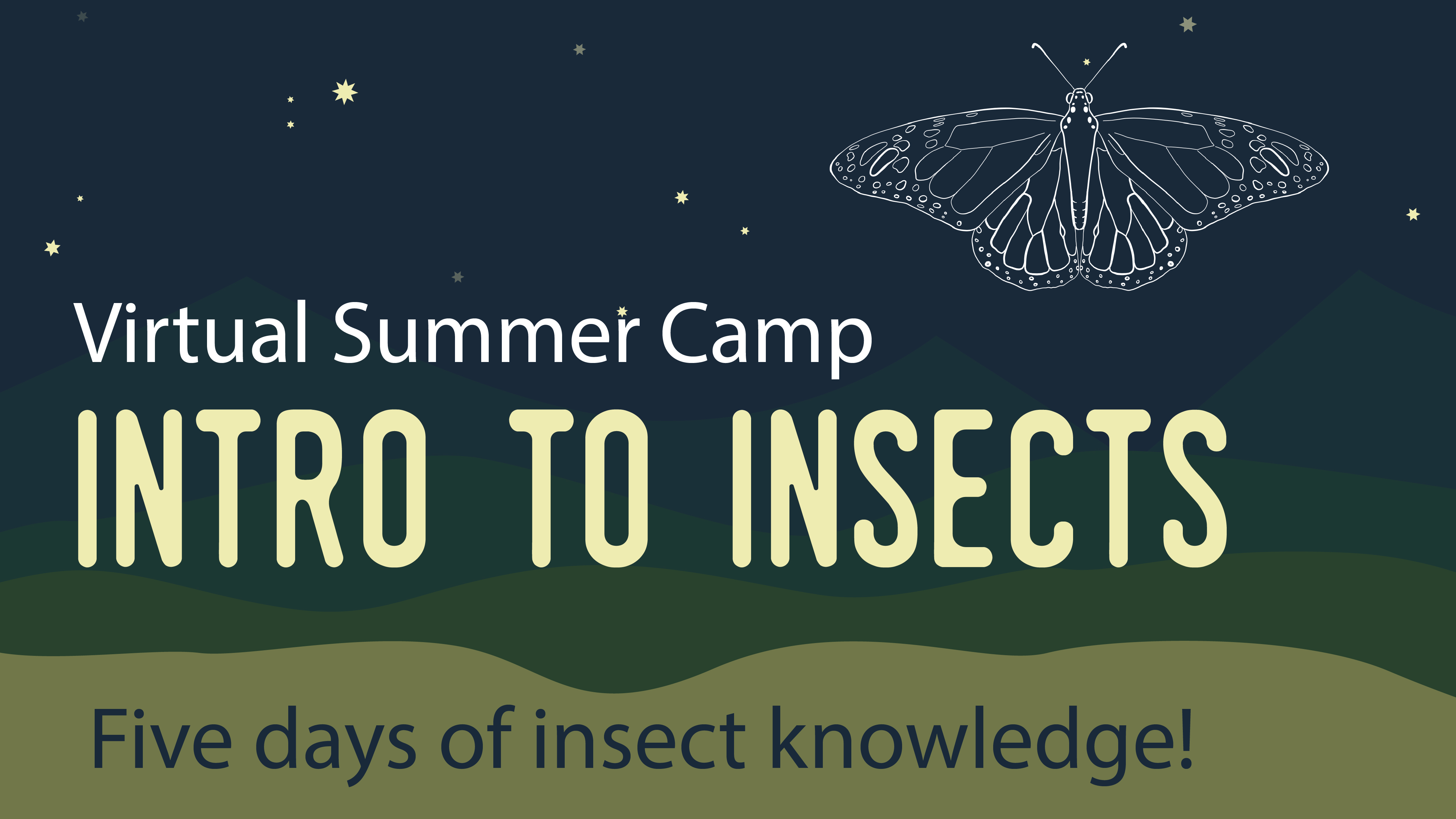 Mississippi Bug Blues Intro To insects virtual summer camp. Five days of insect knowledge. Learn the basic of insect anatomy, insect adaptations, insects and their environments, insects and humans, and much more! Even witness a centipede plotting its escape. Will it execute its escape plan? Will our zookeeper thwart the centipede's escape plan.