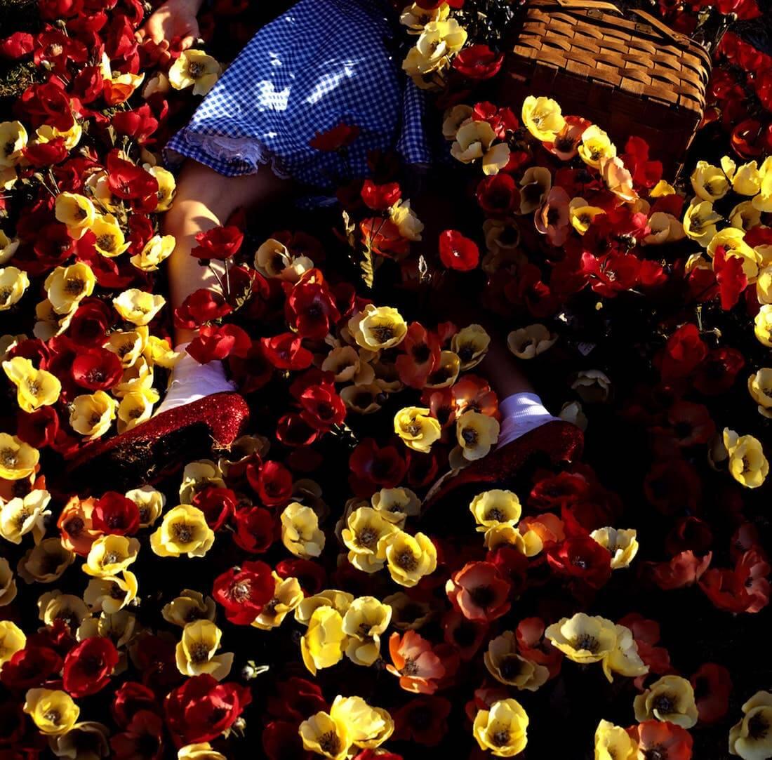 Manfleur Poppies Poppies Poppies