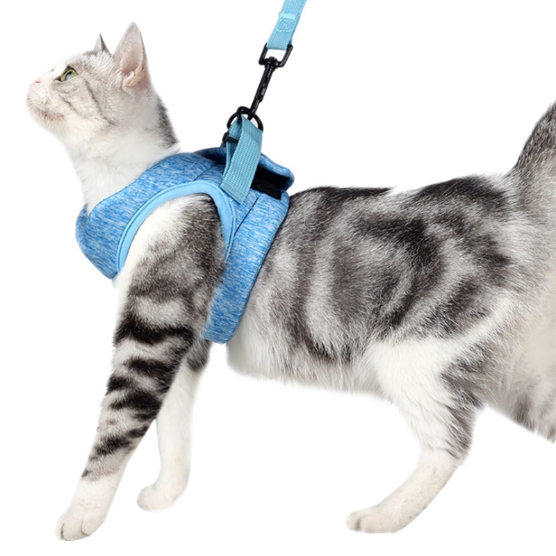 How To Really Walk Your Cat