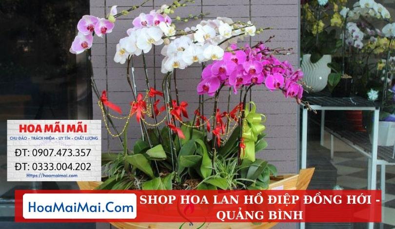 Shop Hoa Lan Hồ Điệp Đồng Hới - Điện Hoa Quảng Bình