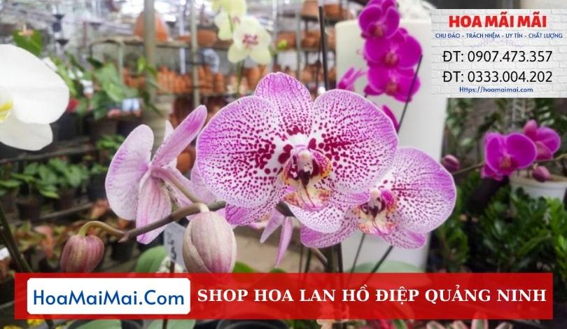 Shop Hoa Lan Hồ Điệp Quảng Ninh - Điện Hoa Quảng Ninh