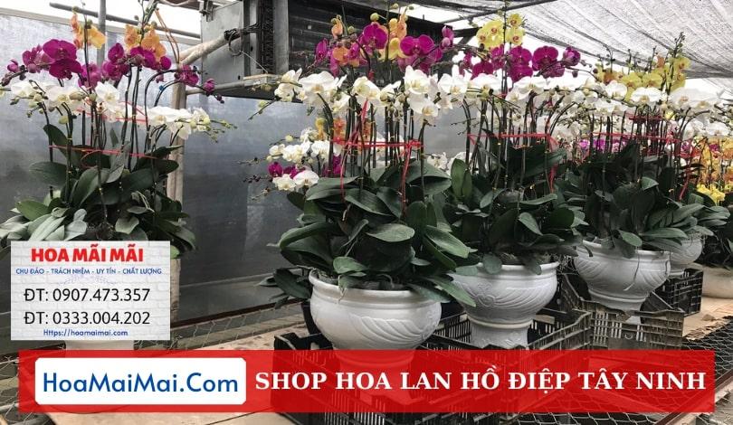 Shop Hoa Lan Hồ Điệp Tây Ninh - Điện Hoa Tây Ninh