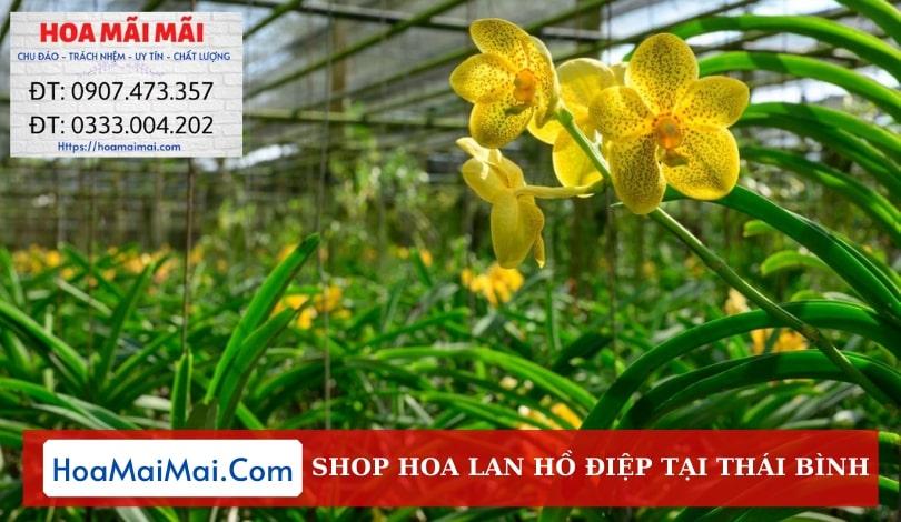 Shop Hoa Lan Hồ Điệp Thái Bình - Điện Hoa Thái Bình