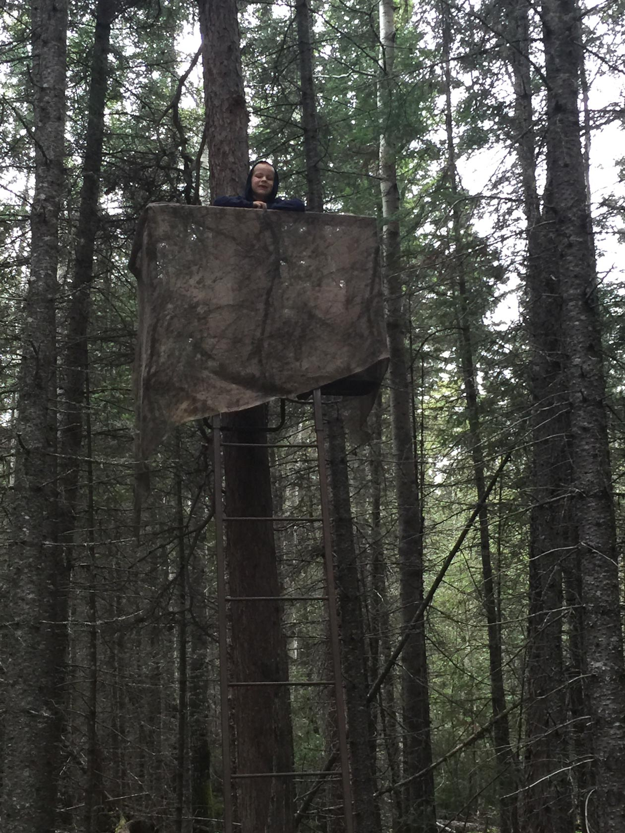A child looks down from a ladder-style stand in a forest.