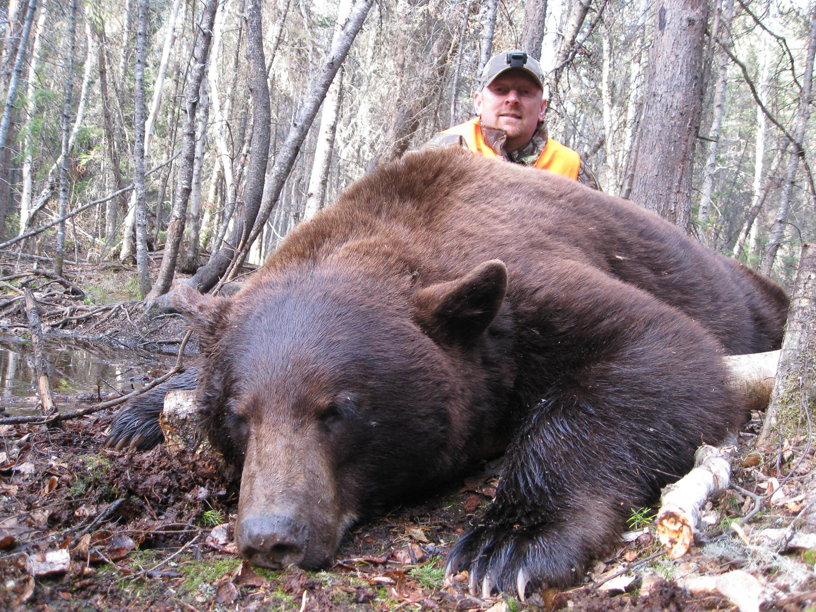 A man kneels behind a very large black bear that has a light brown colouring.