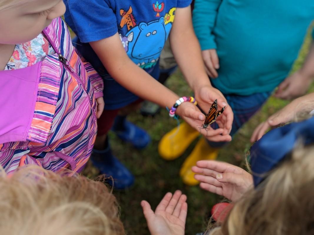 Preschool children holding butterfly in hands