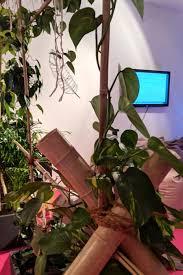 Sichtschutz aus Pflanzen in unserer Redaktion