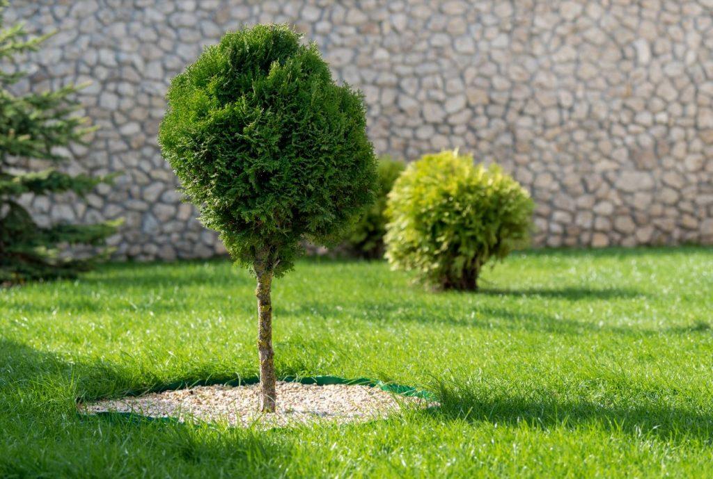 Baum auf einer grünen Wiese
