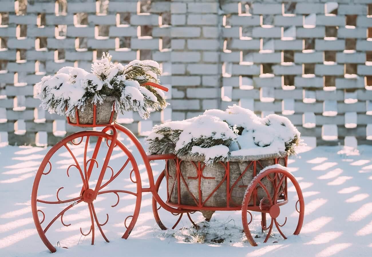 Pflanzen-Tipps für den Winter